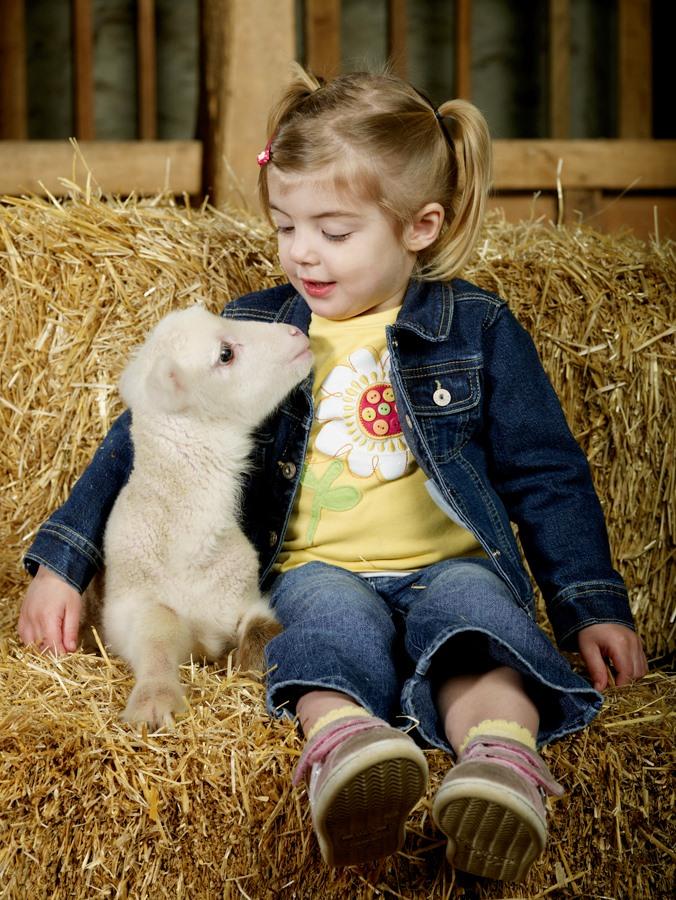 Baby Animals on the Shaker Farm
