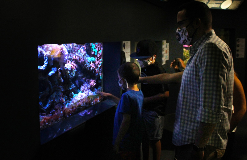 The Berkshire Museum's first floor and Aquarium are currently open by reservation, Thursday through Monday.